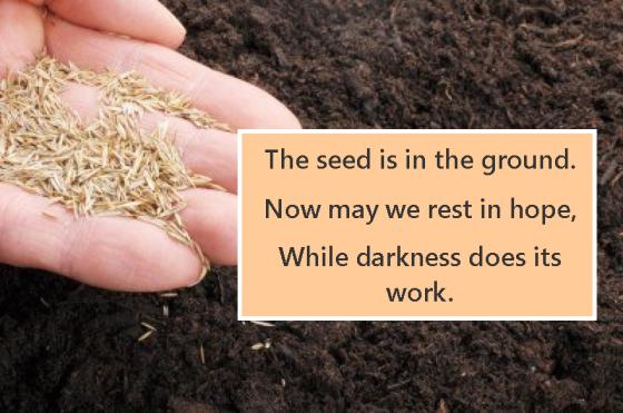 Seedinground