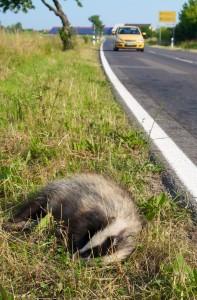 RoadkillBadger-197x300