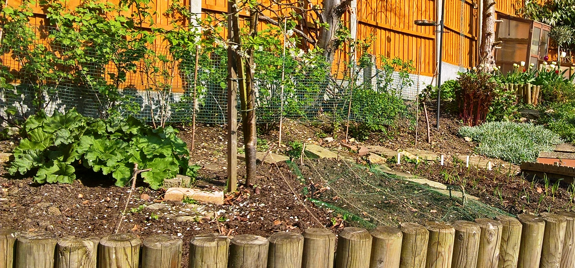 A (new) gardening perspective (Part 1) | Faith in Learning